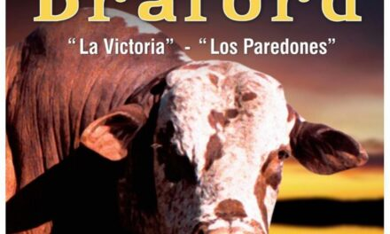 Braford : La Victoria y Los Paredones.