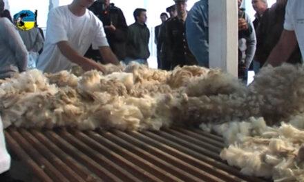 Mercado de lanas con diferente tendencia