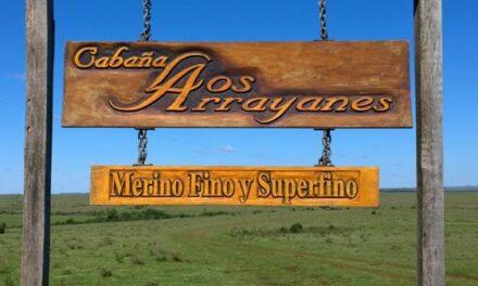«Los Arrayanes» vendió 11.000 kg. de lana
