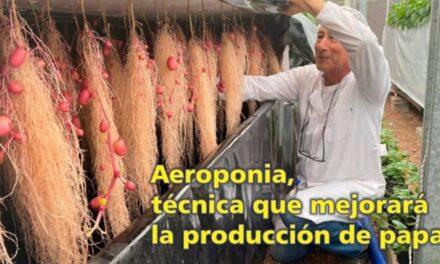 El Palenque Rural: conozca la técnica Aeroponia