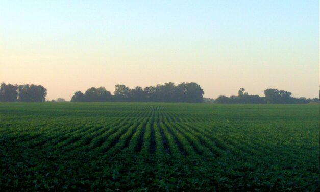 MGAP exhorta cuidados en cosecha de soja