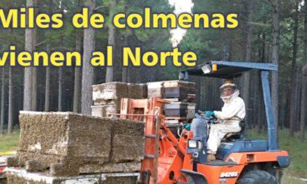 El Palenque Rural: colmenas vienen al Norte
