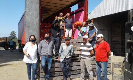 Exportarán 380 mil kilos de cebolla a Brasil