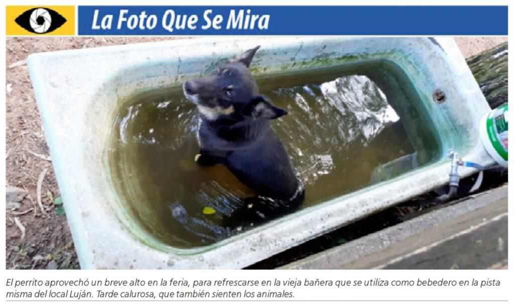 imagen de una foto de un perro adentro de una bañera con agua en una feria ganadera