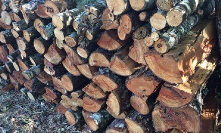 Guías de Tránsito de Leña de Bosque Nativo