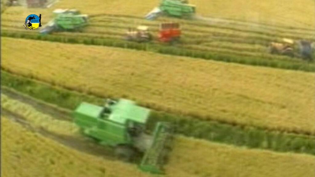 imagen de maquinas cosechando arroz: rendimiento 9.400 kg por hectárea