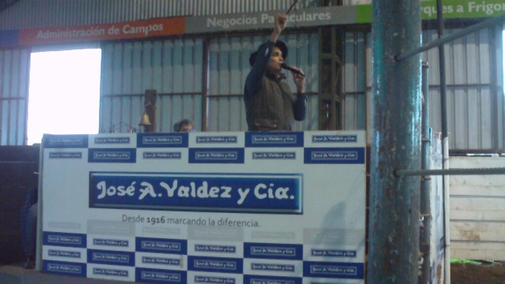 IMAGEN DE ALEJANDRO NUÑEZ REMATANDO EN DON TITO, UNA REVANCHA CON BUENOS TERNEROS