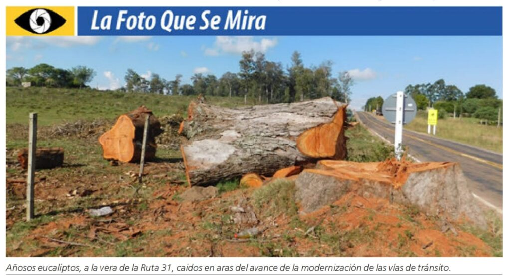 IMAGEN DE LA FOTO QUE SE MIRA: ARBOLES CORTADOS AL LADO DE LA RUTA