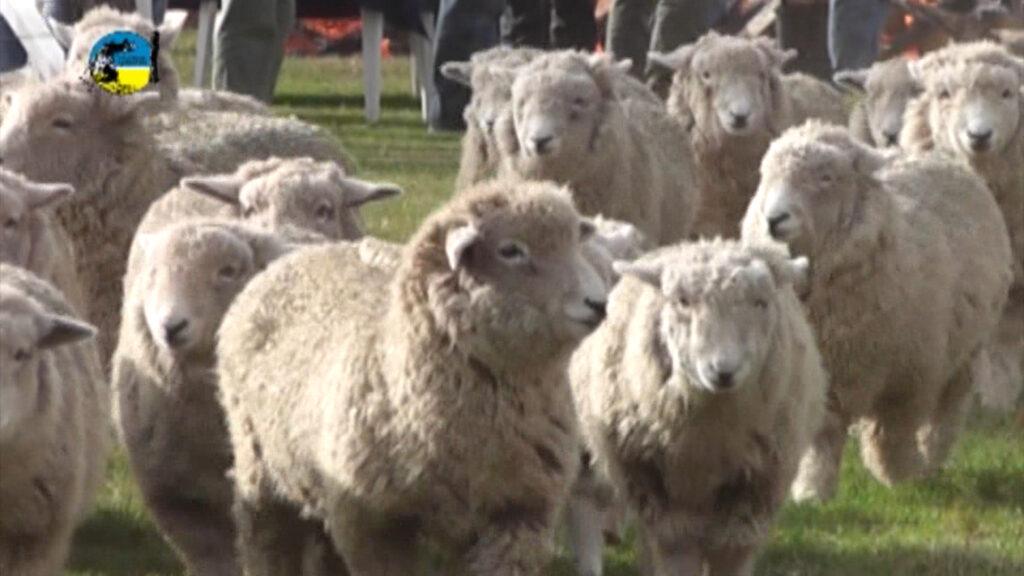 imagen de lanares