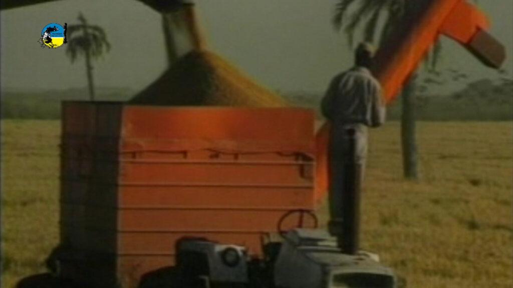 imagen de maquinas con arroz precio provisorio del arroz