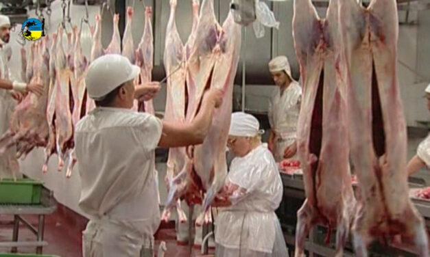Producción de carne ovina de la UE aumenta