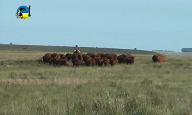 Brigada de Seguridad Rural