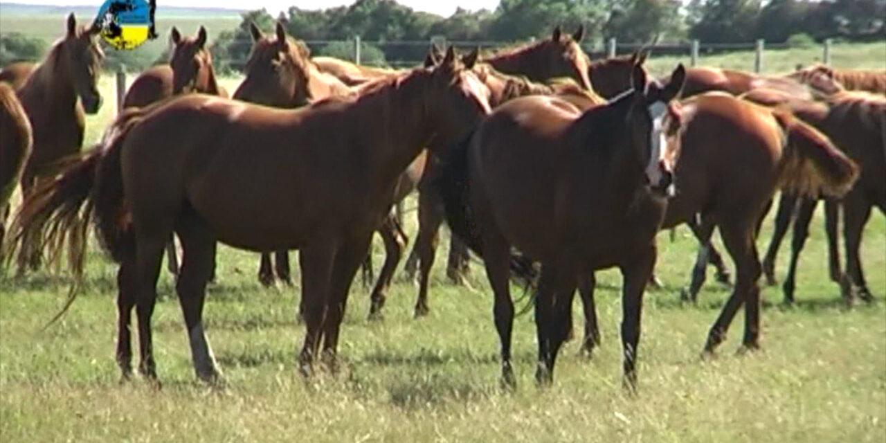 Precio del Equino cotiza a $ 41,90 por kg.