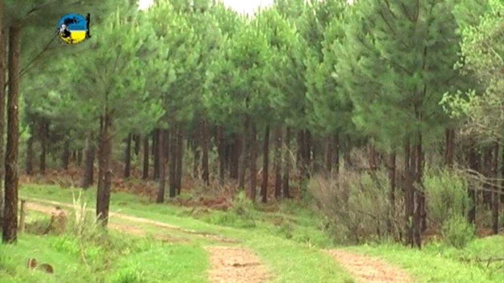 imagen de forestación mgap analizó la cadena forestal