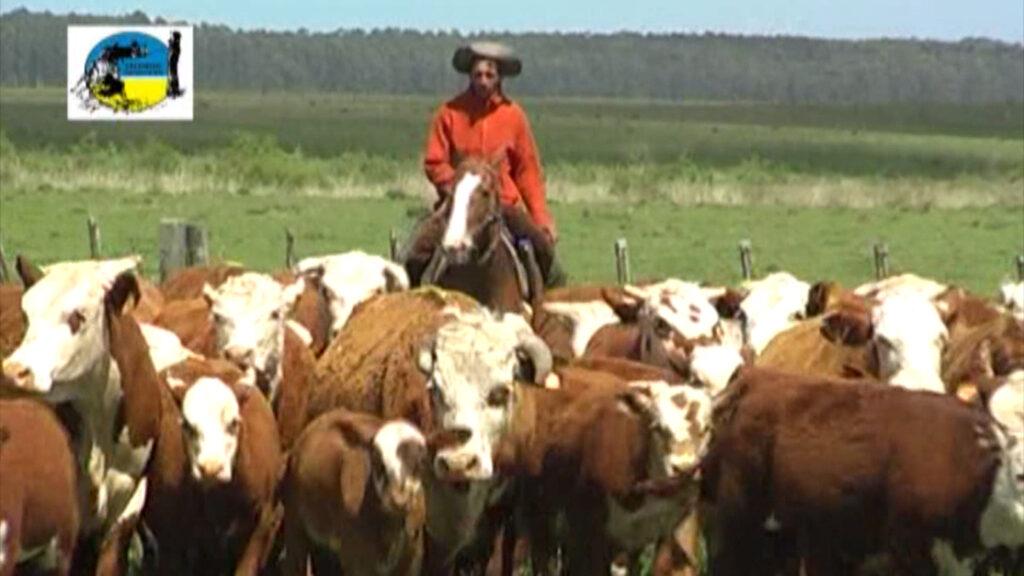 imagen de trabajador del campo arriando ganado palenque: negocios y mercados