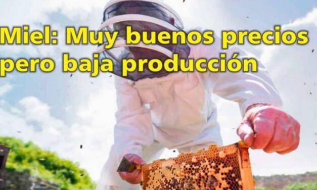 Palenque Rural: Miel muy buenos precios