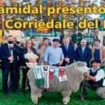 Palenque Rural: super corriedale del Prado