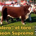 Palenque Rural: «Sabalero» el toro campeón